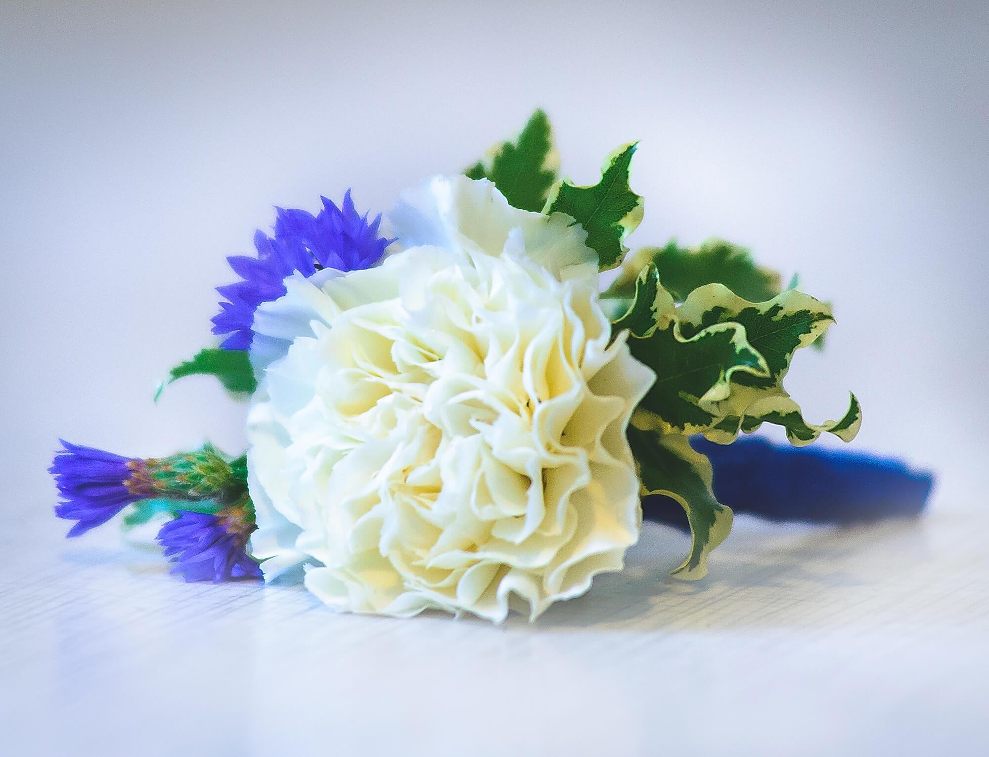 бутоньерка жениха бело-синего цвета с белой гвоздикой и синими васильками