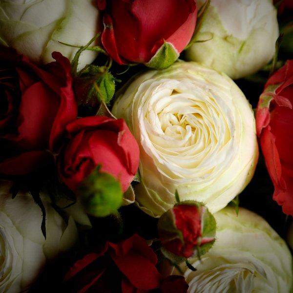 Белые и красные розы в бекете невесты
