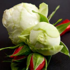 Белые бутоны розы в бутоньерке