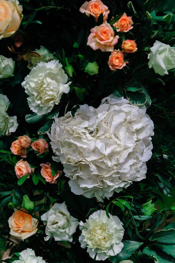 Живая гортензия, розовые розы, зелень в свадебной арке