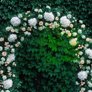 Живые цветы в свадебной арке