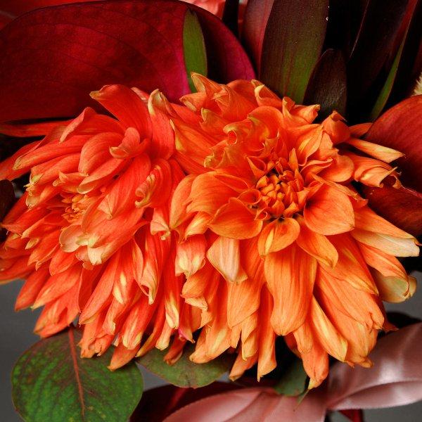 Оранжевые георгины в подарочном букете