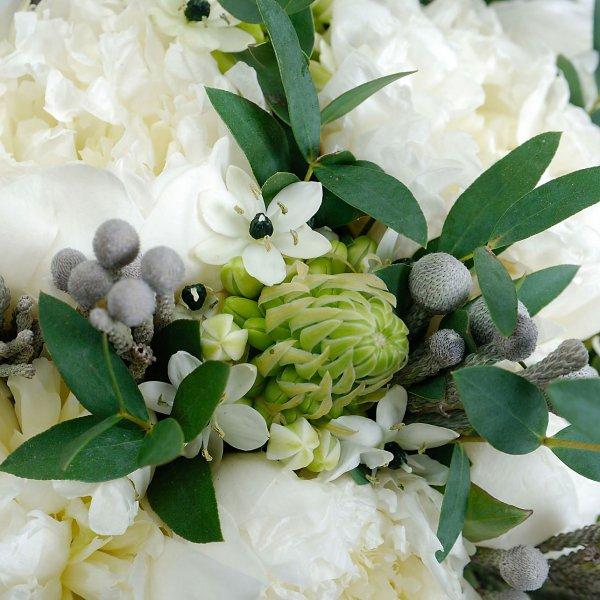 Орнитогалум, брунея и листья эвкалипта в окружении белых пионов